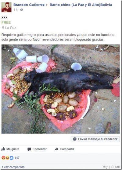 ¡Cuidado! Esto pasa si andas pidiendo gatitos negros para asuntos personales en Facebook